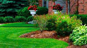Cost of Fertilizing Yard